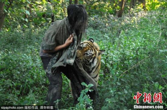 男子养老虎当宠物 印尼玛琅一男子养了一只孟加拉虎