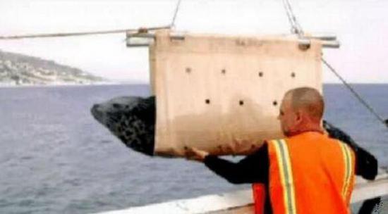 大写的尴尬:直播放生海豹却被鲨鱼吃了_网易数码