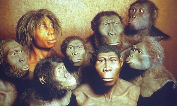 与猿猴和其它动物相比 为什么人类需要的睡眠更少