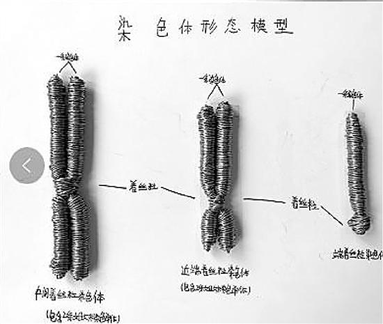 中学老师布置生物作业脑洞大开:红豆做细胞图