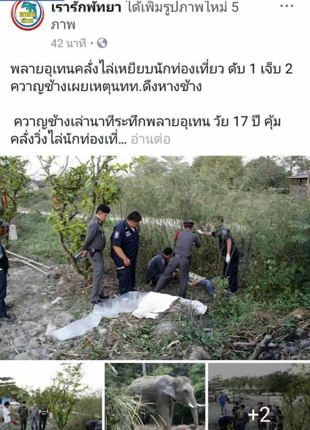 中国驻泰大使馆:要求泰方全力救治被大象所伤游客