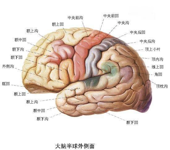 人类大脑只开发了10%,这鬼话竟骗了我这么多年