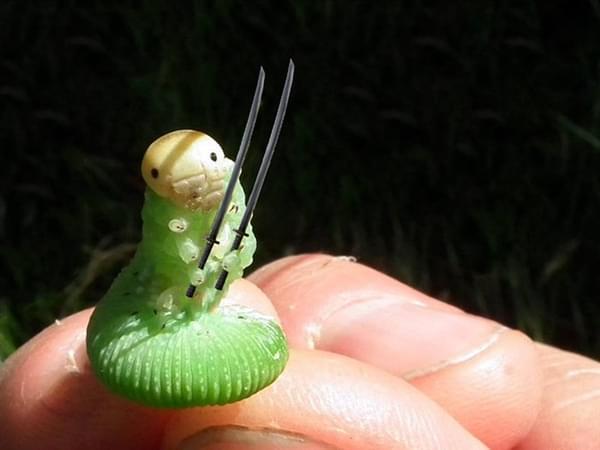 一只青虫引发的PS大战的照片 - 7