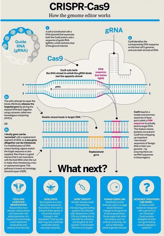 人类首次基因编辑婴儿诞生 带来的是希望还是恐惧?
