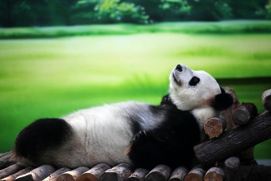 (原标题:熊猫粉丝们的节日) 1993年9月底,时值中国政府发起拯救大熊猫运动10周年之际,主题为人365棋牌娱乐城_365棋牌唯一官网活动_365棋牌电脑下载手机版下载大自然的中国四川成都 93国际熊猫节在成都举行。自此,很多熊猫粉丝都自发地将每年的9月22日称为国际熊猫节,在这一天相约庆祝。 看看这些卖萌的胖达,有没有觉得心情好很多!