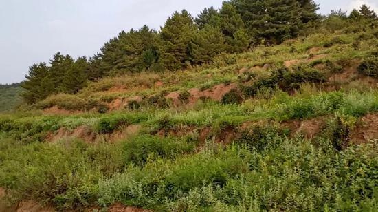 大黄梁山顶平整过的土地,因为没有水电至今无人耕种,一片荒芜。图片来自视频截图