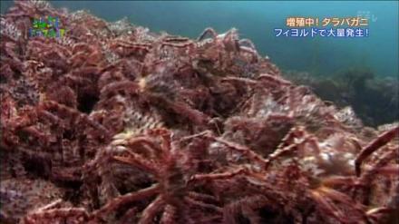 前年挪威帝王蟹泛滥,今年中国终于伸出援手 -