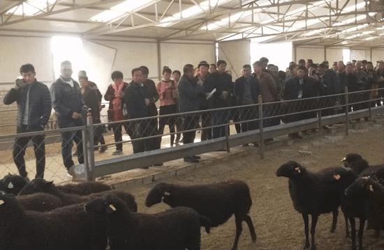 【快讯】宁夏畜牧观察团观光草原乌骨羊巴盟养殖基地