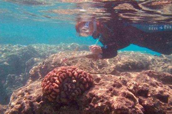 hawaii-coral-bleaching-3.jpg