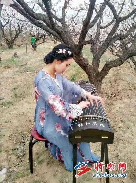 繁峙赵庄:古筝声声飘杏园