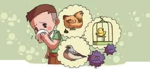 生活大爆炸:春季预防禽流感的措施有哪些?