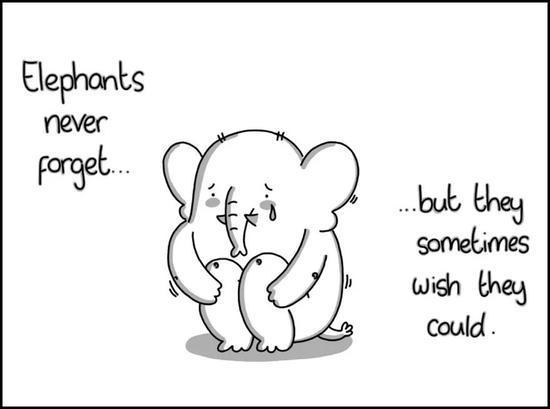 大象的记忆力很好,