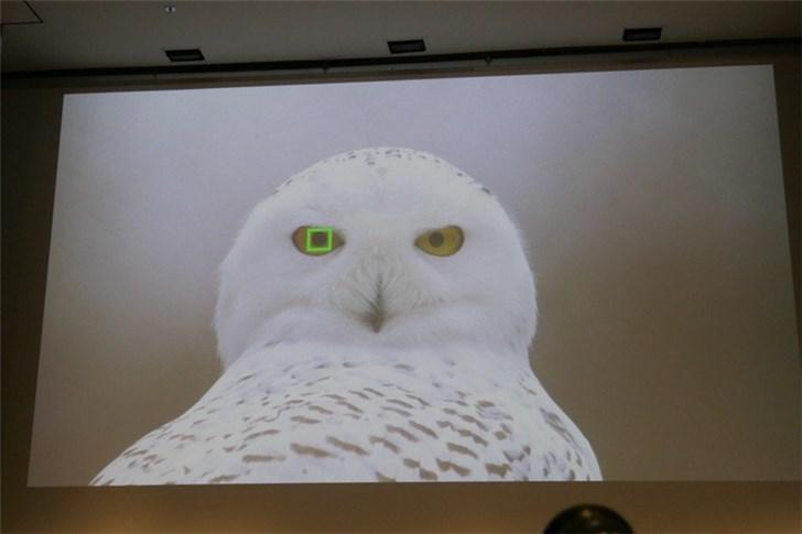 索尼将在α系列相机上加入动物眼部识别功能