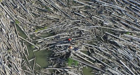 生必有用 死而不息:这是死树们物尽其用的一生