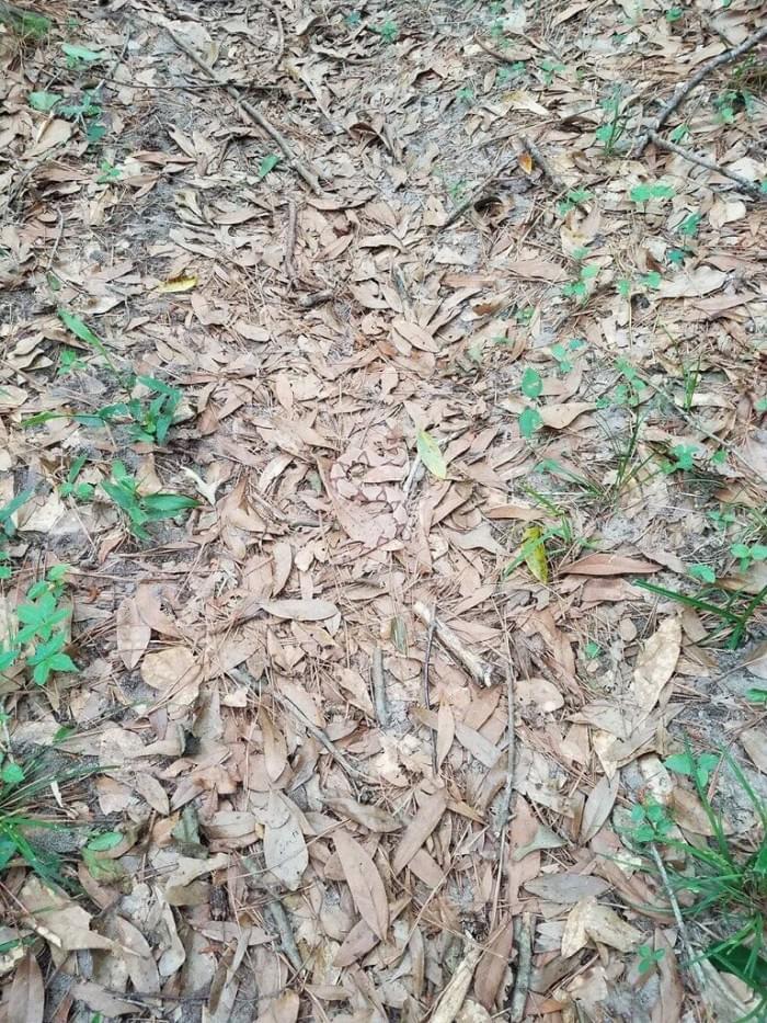 视觉错觉:能快速找出隐藏在树叶堆里的蛇吗?的照片 - 2