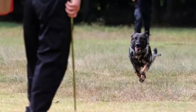 警犬放風翻垃圾被帶走 救助夫妻涉盜竊被取保候審