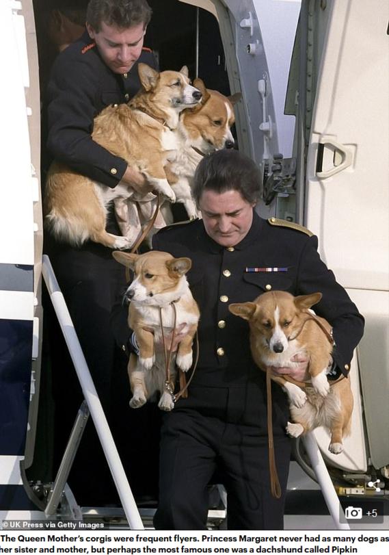 74年陪伴!英女王伊丽莎白二世最后一只柯基犬离世