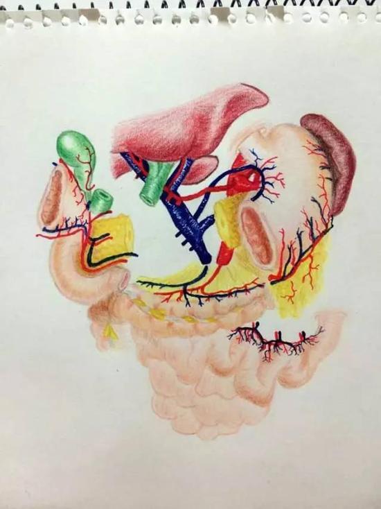 """杭州美女医生走红:十二指肠解剖图成""""成名之作"""""""