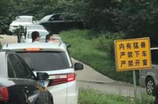 事情发生在八达岭野生动物园东北虎园区内,由于游客众多,车辆出现