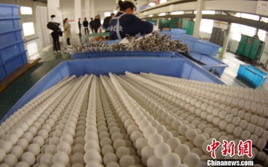 工人准备将干燥后的瓷珠放入烤箱。瓷珠经过上釉后,需经1300度高温烧制后出炉。 王昊阳 摄