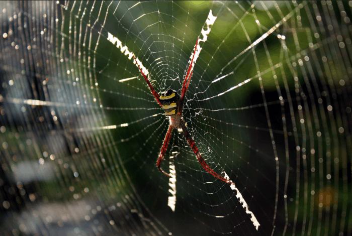 德国科学家称人们天生就害怕蜘蛛和蛇