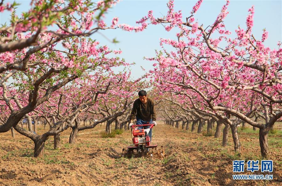 #(农业)(3)谷雨时节农事忙