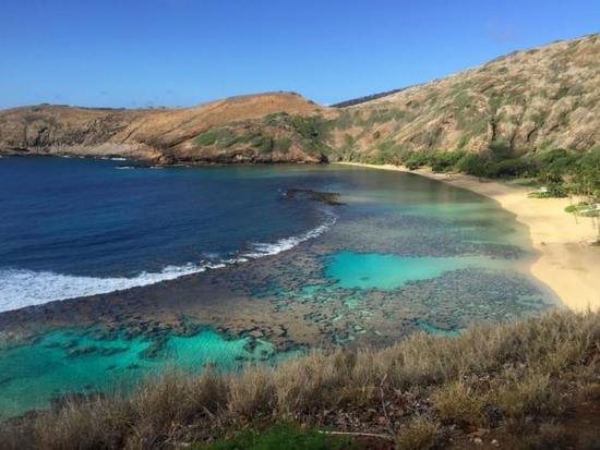 hawaii-coral-bleaching-2.jpg