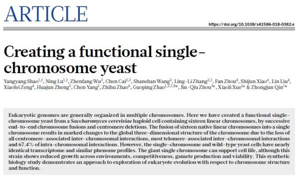 中国人工合成生命里程碑:创建全球首例人造单染色体真核细胞