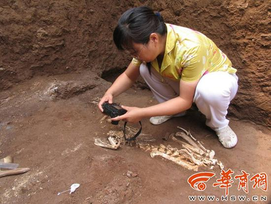 疑似秦始皇祖母墓出土长臂猿遗骸 将进行DNA研究