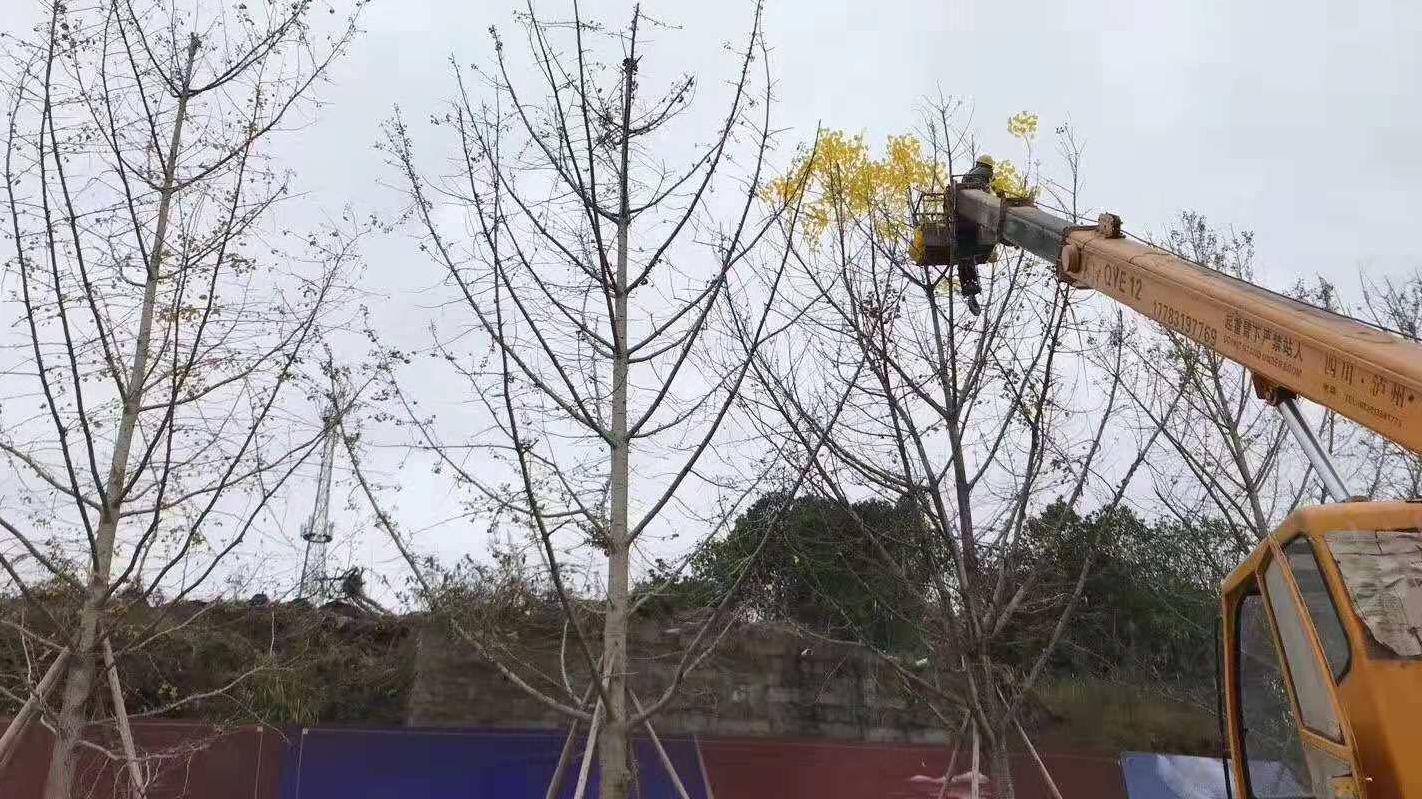 重庆为迎接检查给树枝挂人造树叶?官方:系商家所为
