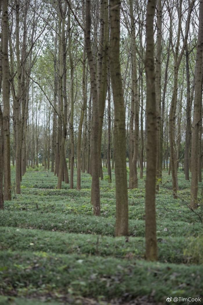 库克发微博庆祝植树节,呼吁保护森林资源的照片 - 2