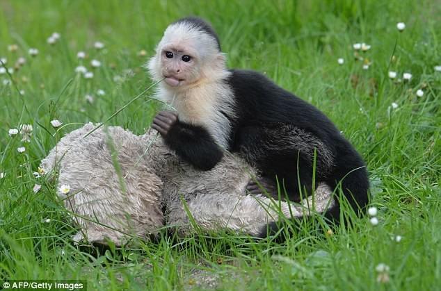 猴狗行为揭示人类道德起源 偏爱乐于助人和公正之人