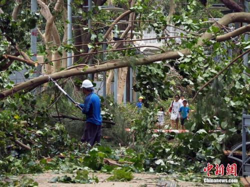 """9月17日上午,工程人员在香港维多利亚公园砍锯倒塌的树木。受台风""""山竹""""影响,香港有1500宗塌树报告,维园受灾严重。中新社记者洪少葵摄"""