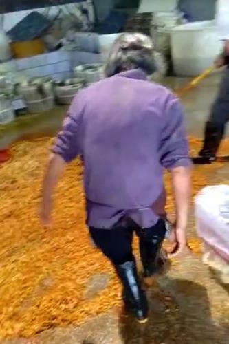 榨菜工厂违规生产过程曝光 乌江涪陵榨菜:不是我们