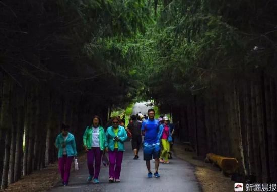 乌苏佛山国家森林公园待甫僧景区,游客走在绿荫小道上.