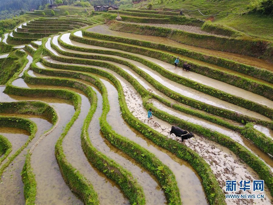 #(农业)(1)谷雨时节农事忙