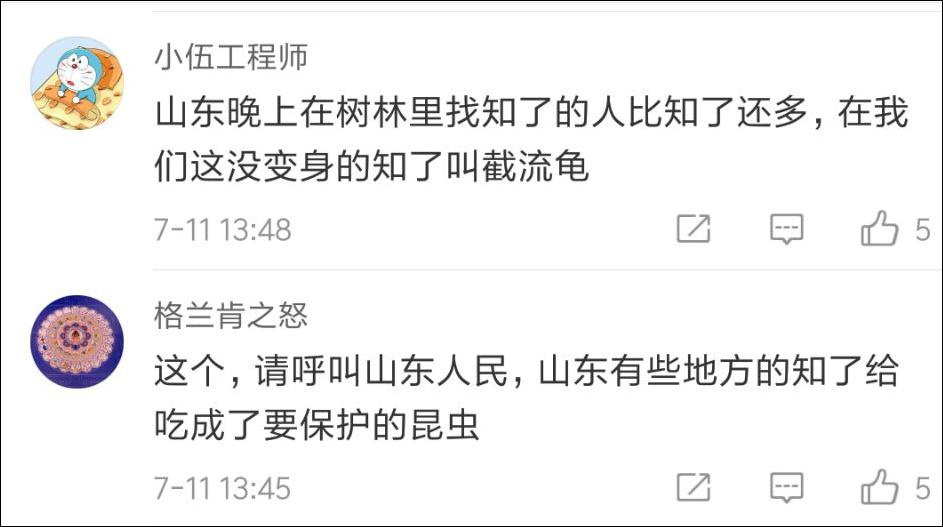 杭州绿化管理站:知了太多请爱吃的人帮忙抓一下