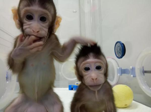 China cloned a monkey using non-reproductive cells