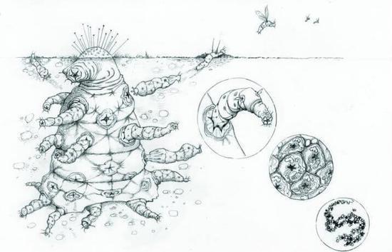 外媒分析外星人與達爾文的進化論有關-圖片來自貓撲養生網_www.gdzpu.com