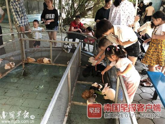 男孩动物园喂兔子被咬 家长索偿:没人提醒兔子咬人