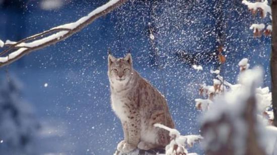 报告称全球野生动物数量1970年以来减少了58%