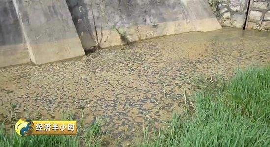 这家上市公司污染环境无视环保部督察 当地居民5年没水喝