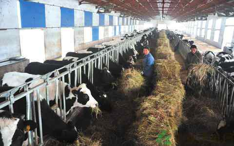 饲料和饲草涨价,带来全国公斤奶成本增加6%左右。来源:网络