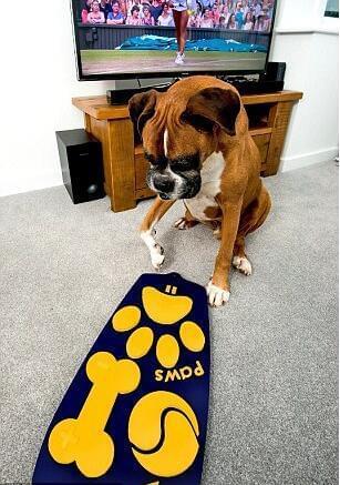 宠物狗专用遥控器出路 随心所欲看电视