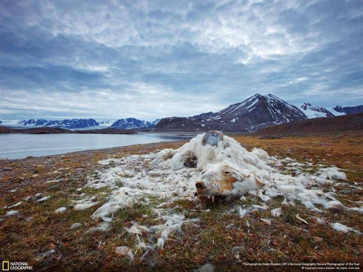 国家地理年度自然摄影比赛2016得奖作品