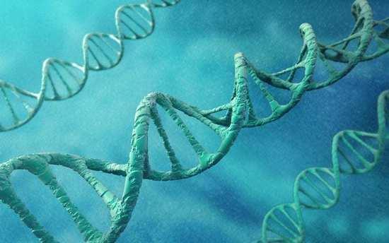 gay真的是天生的 影响男性性取向单个基因首次发现