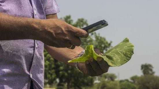 移动应用新用途 帮助农民保护庄稼
