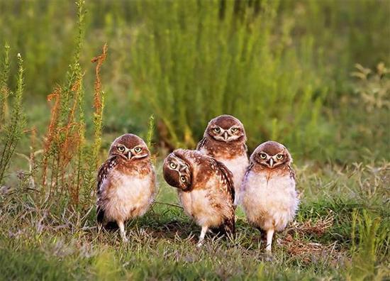 喜感爆棚 搞笑野生动物摄影大赛结果出炉