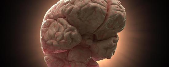 脑袋越大越聪明?来看看那些聪明绝顶的小脑袋动物