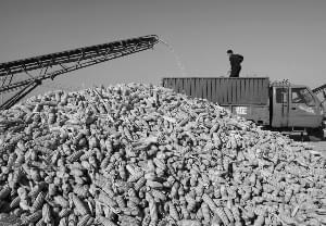 """粮食领域供给侧改革路径圈定 玉米居""""去库存""""首位"""
